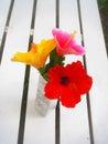 китайские розы Стоковые Изображения