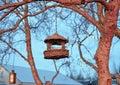 к етка птицы Стоковые Изображения