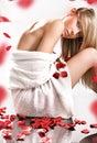 Лепестки Rose Стоковая Фотография