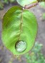 лист цветка розы Стоковое Изображение