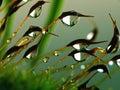 мох пущи Стоковое Фото