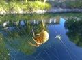 обе паука Стоковое фото RF