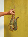 омара Стоковая Фотография