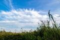 панорама в тростниках Стоковые Изображения RF