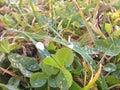 па ения в траве Стоковое Изображение RF