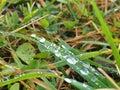 па ения в траве Стоковая Фотография RF