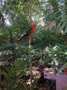 покрашенный попугай на зоопарке taronga Стоковая Фотография