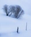 по е с  еревьями в зиме Стоковые Изображения