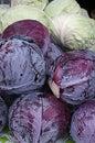 пурпур капуст зе еный Стоковая Фотография