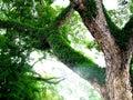 разветв ять Стоковая Фотография RF
