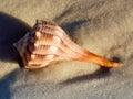раковина моря Стоковая Фотография RF