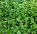 свежие  икие растения Стоковые Фотографии RF
