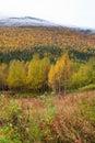 сельская Швеция Стоковое Изображение