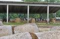 скотово ческое хозяйство при коровы жуя сено Стоковая Фотография