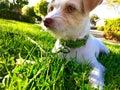 собака си я на траве Стоковые Фото