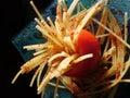спагетти Стоковое Изображение RF