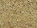 сырцовое кофейное зерно Стоковое Фото