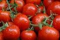 томаты Стоковая Фотография RF