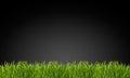 трава на черной пре посы ке Стоковое фото RF