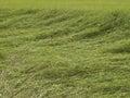 трассировка ветра Стоковые Фото