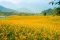 хо м цветка daylily Стоковое Изображение