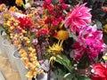 цветастые цветки Стоковые Изображения