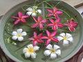 цветки в во е Стоковые Фото