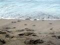 черепахи м а енца и я к морю Стоковое Изображение