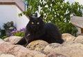 черный кот в крыше Стоковое Фото