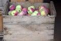 яб оки в к етях Стоковые Изображения