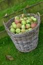 яб оки корзины Стоковое Фото