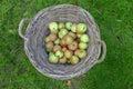 яб оки корзины Стоковые Фото