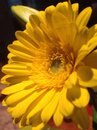 яркий же тый цвет цветка Стоковые Фото
