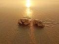 两个螃蟹 免版税图库摄影
