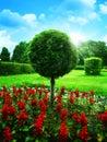 乐观的庭院 库存照片
