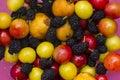五颜六色,新鲜 果的汇集 库存照片