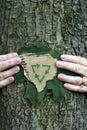 保护环境结构树 库存照片