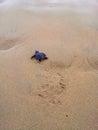做它的小乌龟是道路通往海  库存照片