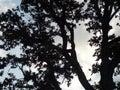 分支 构树 库存图片