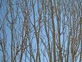 分行仿造结构树 免版税库存照片