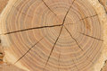 切片木木材自然本底 免版税库存图片
