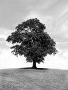唯一五颜六色的树和天空 库存照片