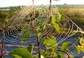 在分支的蜘蛛网 北自然的风景 免版税库存照片