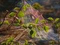 在分支的蜘蛛网 北自然的风景 库存照片