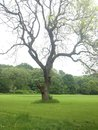 在域的 构树 库存图片