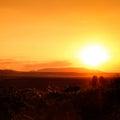在夏天日落下的葡萄园 免版税库存照片