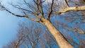 在天空的 构树 库存图片