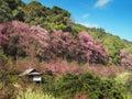 在山的木小屋 免版税图库摄影