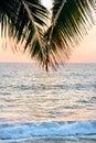 在日落前面的一棵棕榈树 图库摄影