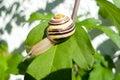 在板料的蜗牛 库存图片